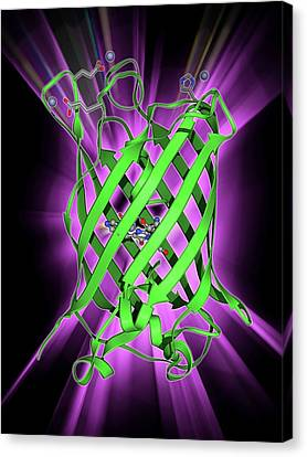 Green Fluorescent Protein Molecule Canvas Print by Laguna Design