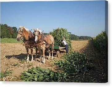Harvest On An Amish Farm Canvas Print by Jim West