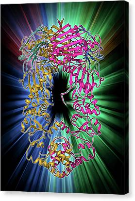Shock Canvas Print - Heat Shock Protein 90 Chaperone Complex by Laguna Design