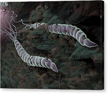 Helicobacter Pylori Canvas Print - Helicobacter Pylori Bacteria by Hipersynteza