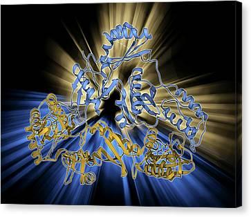 Hiv Reverse Transcription Enzyme Canvas Print by Laguna Design