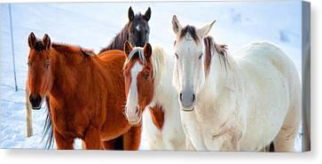 4 Horses Canvas Print