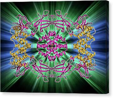Interferon Antagonism By Viral Protein Canvas Print by Laguna Design