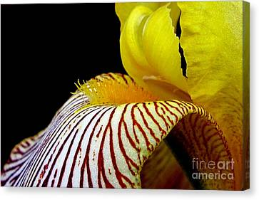 Iris Canvas Print by Irina Hays