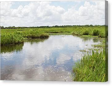 La, Lafitte, Airboat Swamp Tour Canvas Print