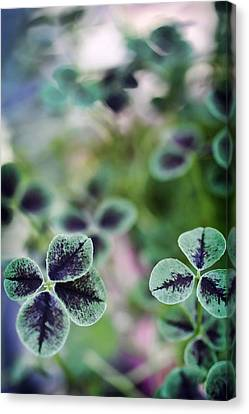 4 Leaf Clover Canvas Print