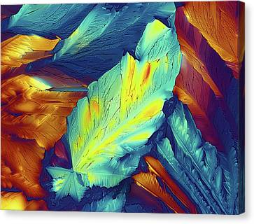 Light Micrograph Of Citric Acid Crystals Canvas Print by Alfred Pasieka