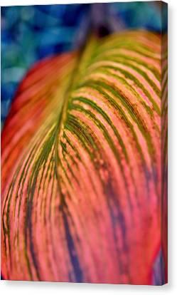 Lily Leaf Canvas Print by Werner Lehmann