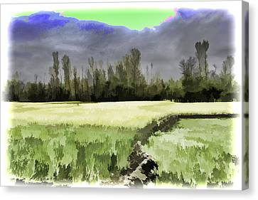 Mustard Fields In Kashmir Canvas Print
