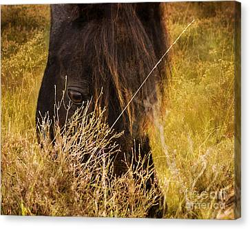 New Forest Pony Canvas Print by Angel  Tarantella