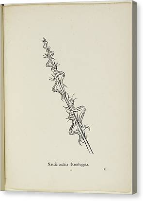 Edition Canvas Print - Nonsense Botany By Edward Lear by British Library