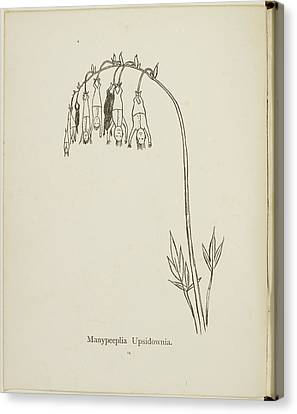 Edition Canvas Print - Nonsense Botany Collection By Edward Lear by British Library
