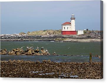 Or, Oregon Coast, Bandon, Coquille Canvas Print by Jamie and Judy Wild