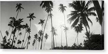 Palm Trees On The Beach, Morro De Sao Canvas Print by Panoramic Images
