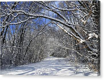 Path In Winter Forest Canvas Print