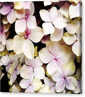 Petals Canvas Print by Les Cunliffe