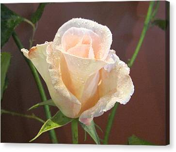 Pink Rose Canvas Print by Joyce Woodhouse