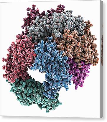Proliferating Cell Nuclear Antigen Canvas Print