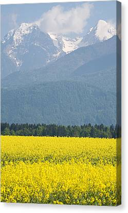 rapeseed field in Brnik with Kamnik Alps in the background Canvas Print by Ian Middleton