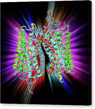 Rhodopsin Molecule Canvas Print by Laguna Design