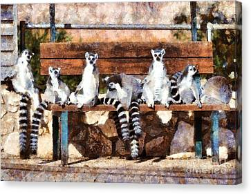 Ring Tailed Lemurs Canvas Print