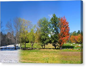 Canvas Print featuring the photograph 4 Season Trees In New Hampshire by Larry Landolfi