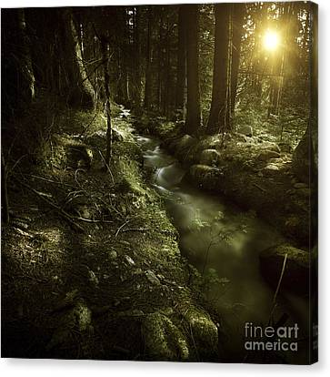 Small Stream In A Forest At Sunset Canvas Print by Evgeny Kuklev