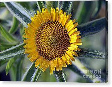 Spring Wild Flower Canvas Print by George Atsametakis