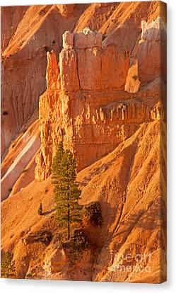 Sunrise At Sunset Point Bryce Canyon National Park Canvas Print