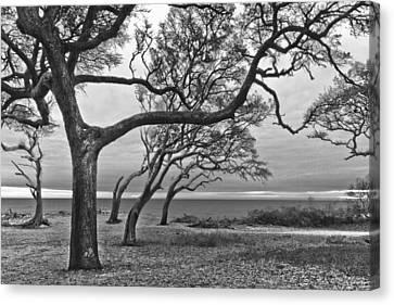Jeckll Island Canvas Print - The Reach by Debra and Dave Vanderlaan
