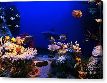 Underwater Scene Canvas Print