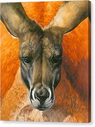 Kangaroo Portriat Canvas Print by John Francis