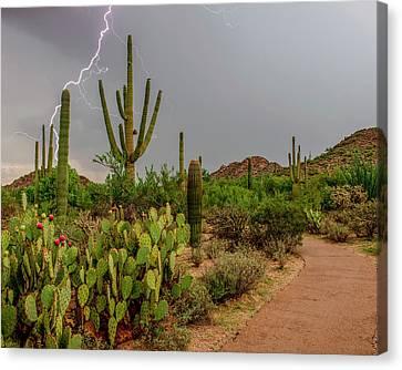 Usa, Arizona, Tucson, Saguaro National Canvas Print by Peter Hawkins