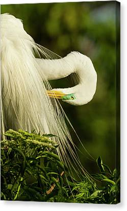Usa, Florida, Gatorland Canvas Print by Jaynes Gallery