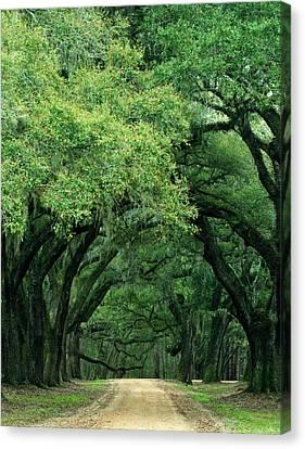 Usa, South Carolina, Charleston Canvas Print by Jaynes Gallery