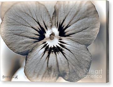 Viola Named Sorbet Blue Heaven Jump-up Canvas Print by J McCombie
