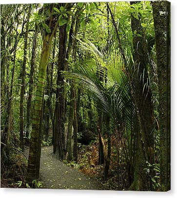 Walking Trail Canvas Print by Les Cunliffe