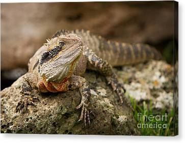 Water Dragon Canvas Print by Craig Dingle