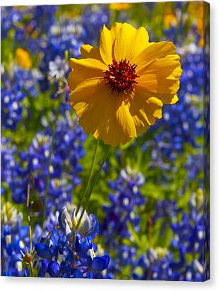 Canvas Print featuring the photograph Wildflowers by John Babis