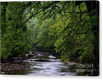 Trout Stream Landscape Canvas Print - Williams River Spring by Thomas R Fletcher