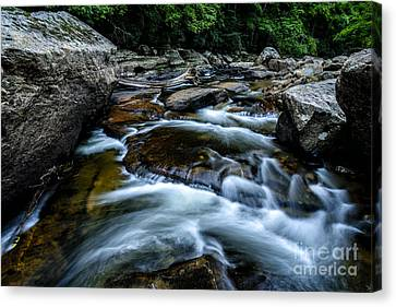 Trout Stream Landscape Canvas Print - Williams River Summer by Thomas R Fletcher