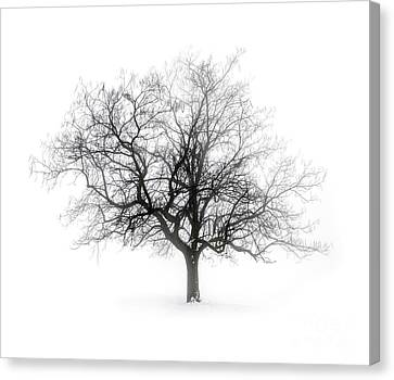 Winter Tree In Fog Canvas Print