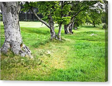 Woodland Canvas Print by Tom Gowanlock