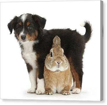 House Pet Canvas Print - Puppy And Rabbit by Mark Taylor