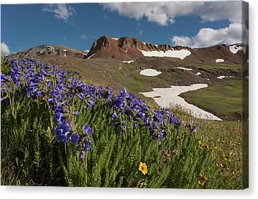 Avens Canvas Print - Usa, Colorado, San Juan Mountains by Jaynes Gallery
