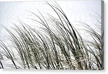 Dune Grass Canvas Print by Werner Lehmann