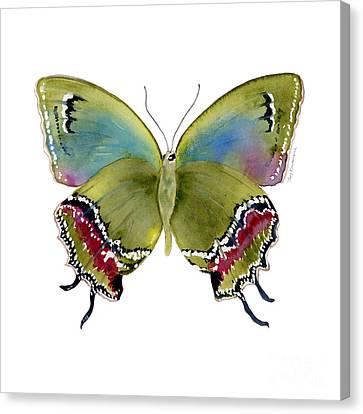 Lime Canvas Print - 46 Evenus Teresina Butterfly by Amy Kirkpatrick