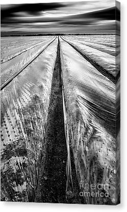 5-4-3 Canvas Print by John Farnan