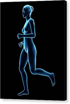 Anatomy Of Runner Canvas Print by Sebastian Kaulitzki