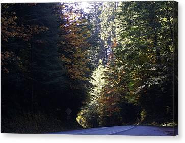 Autumn 4 Canvas Print by J D Owen